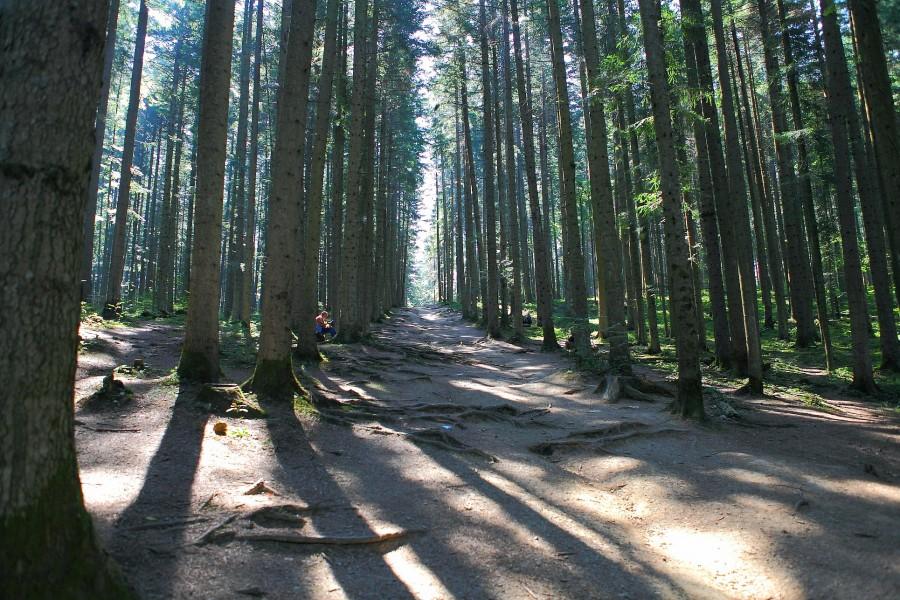 лес по пути к минеральной воде сходница