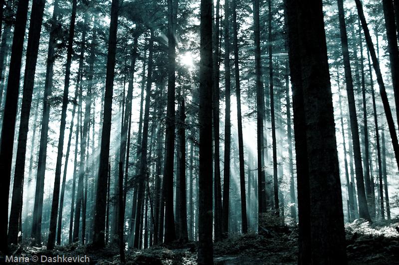 лес в сходнице